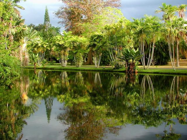 Jardin de pamplemouse
