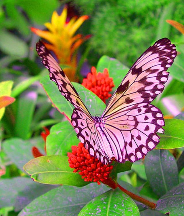 Jardin des papillons de knokke