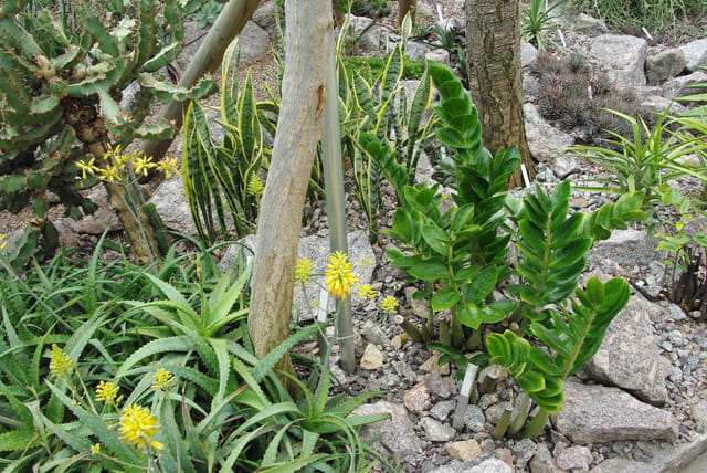 jardin des plantes succulentes par josiane castrec sur l 39 internaute. Black Bedroom Furniture Sets. Home Design Ideas