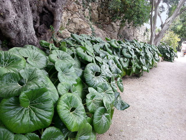 Jardin Exotique (1)