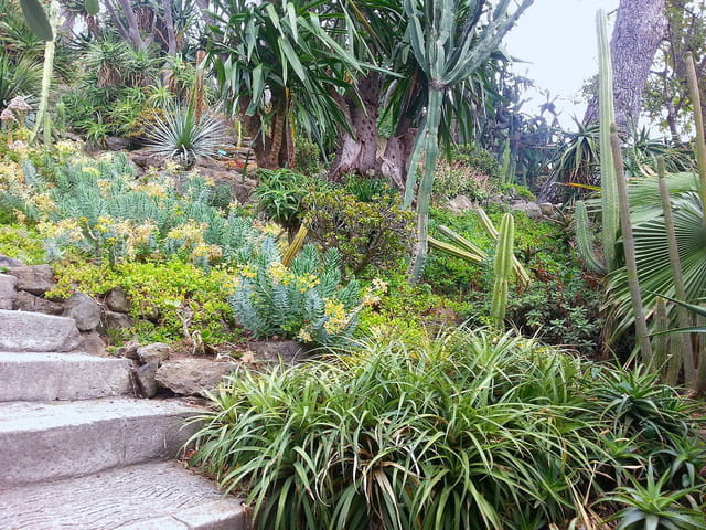 Jardin Exotique (2)