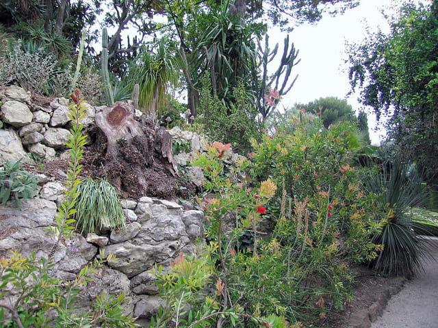 Jardin Exotique (8) Callistemon laevis