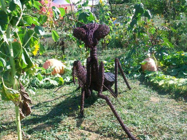 Jardin extraordinaire par bernard goulene sur l 39 internaute for Jardin extraordinaire