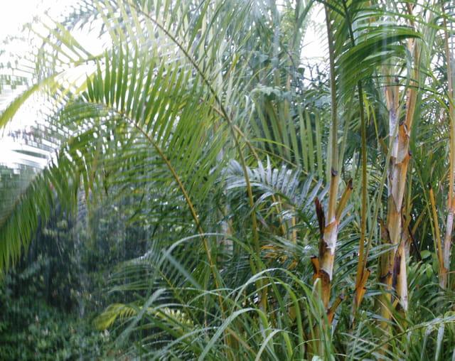 Jardin sous la pluie 5