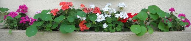 Jardinière fleurie