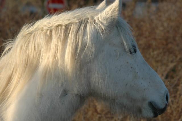 Jeu de lumière sur le cheval