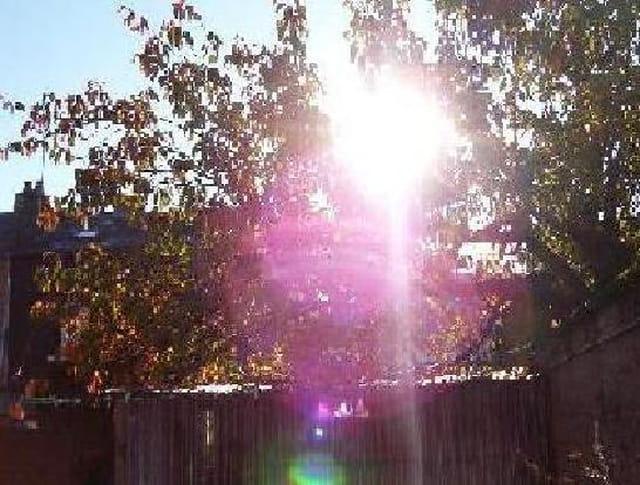Jeu de soleil dans un arbre
