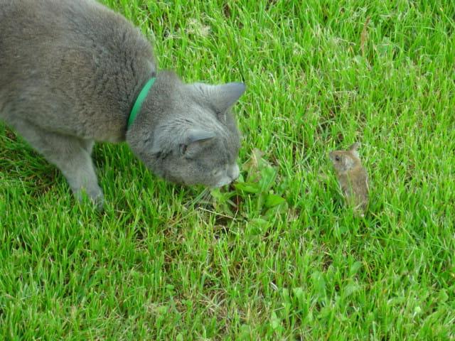 Jeu: le chat et la souris