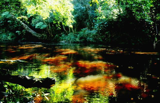 Jeux de lumière dans la jungle