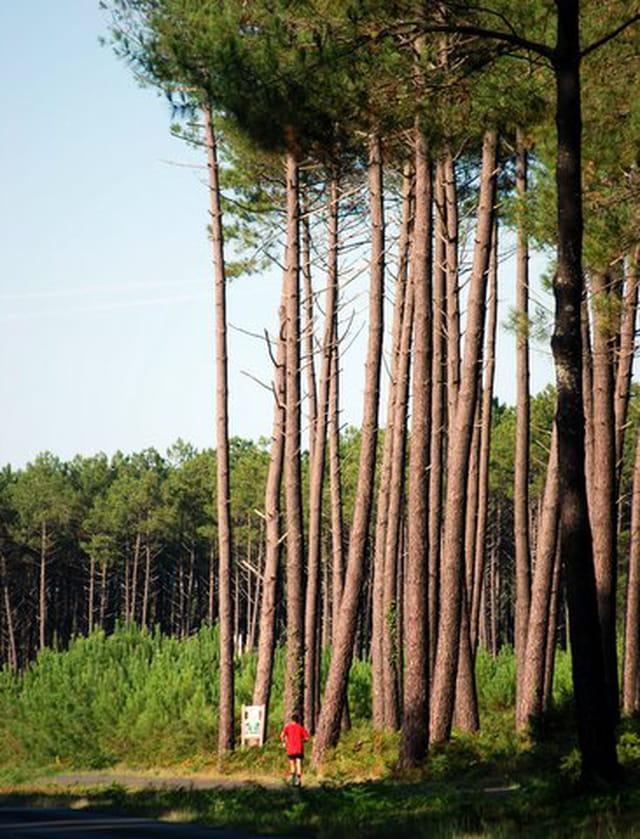 jogging dans les pins