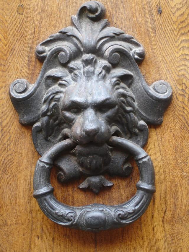 Jolie tête de lion