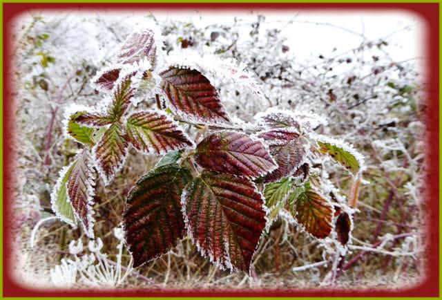 Jolies couleurs hivernales (photo du 01/01/2017)