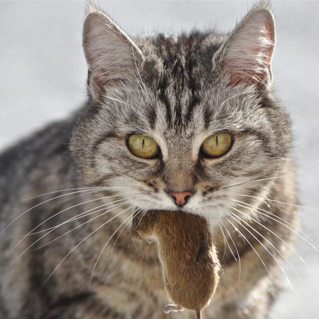 Jouer au chat et à la souris...