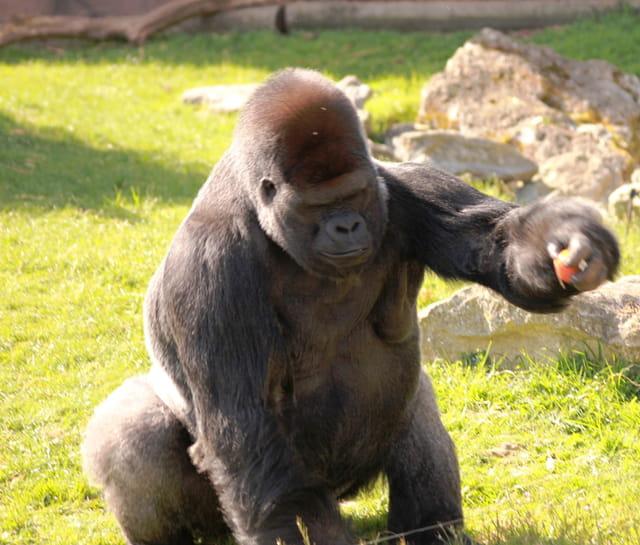 journee au zoo