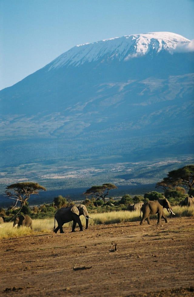 Kilimanjaro