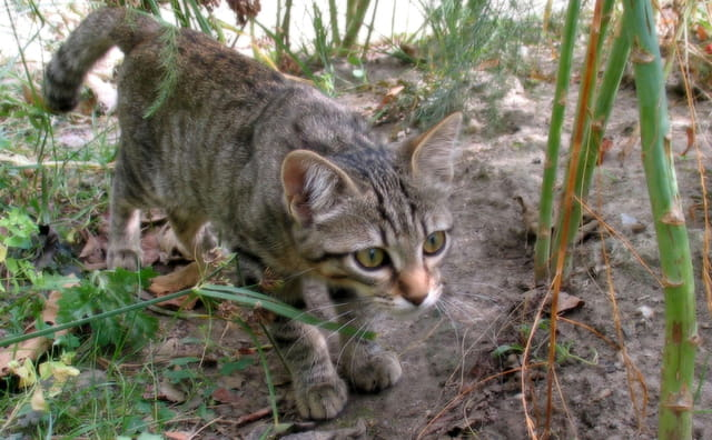 Kilya, la chatte de ma soeur.
