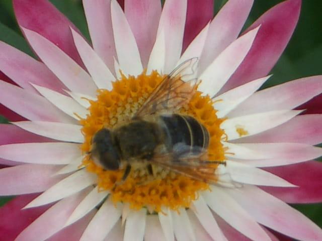 L'abeille déclinée en 3 D - '2'
