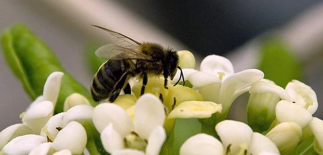L'abeille et le printemps