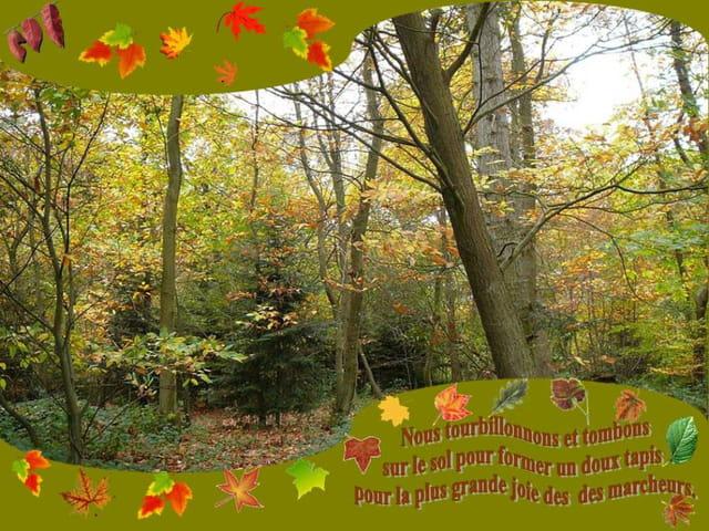 L'adieu des feuilles en automne