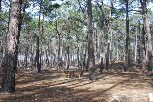L'aire de pique nique dans les bois