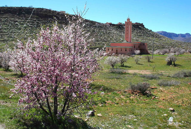 منطقة تسمى تافراوت l-amandier-en-fleur-