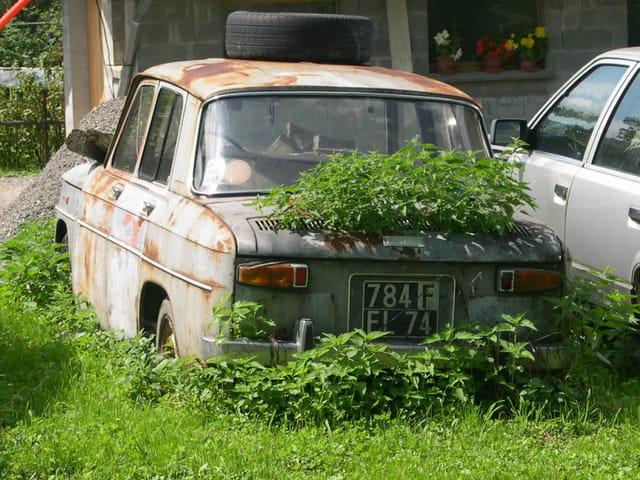 R8 (Renault) plante verte