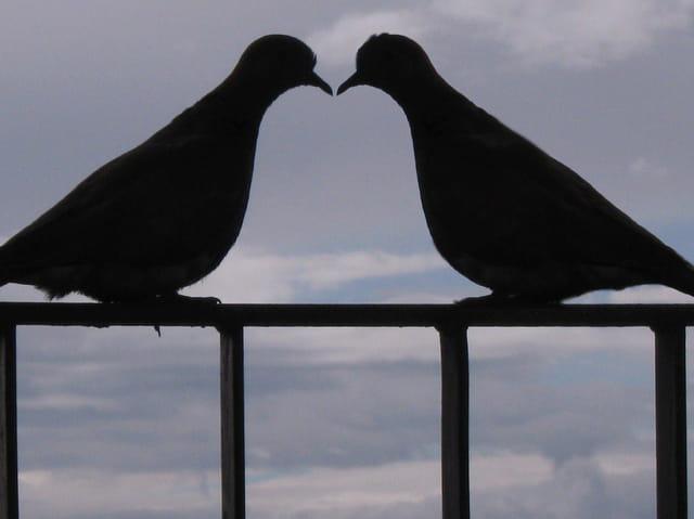 L'amour sur mon balcon
