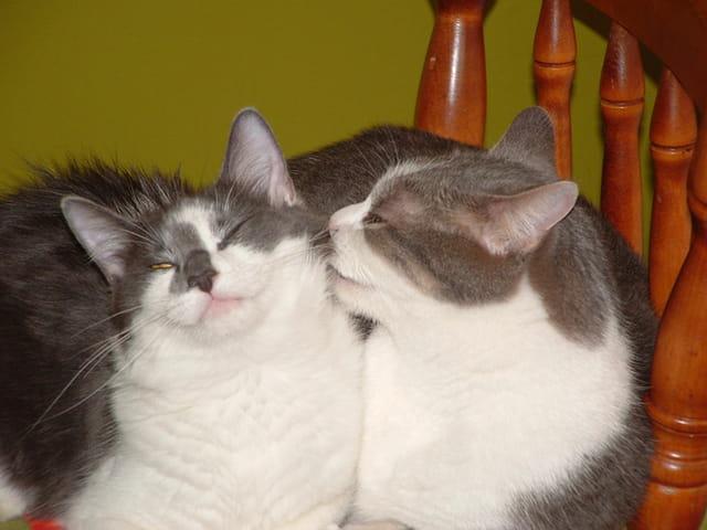 L'amour toujours l'amour...