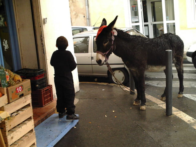 L'âne du père Noël