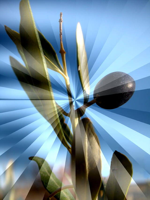 L'Ange Olive