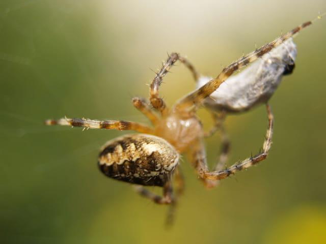 L'araignée et la guêpe