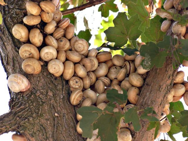 L\'arbre à escargots