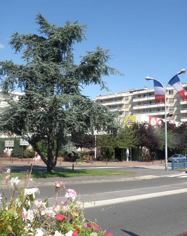 L'arbre et les drapeaux, au centre ville du Pecq