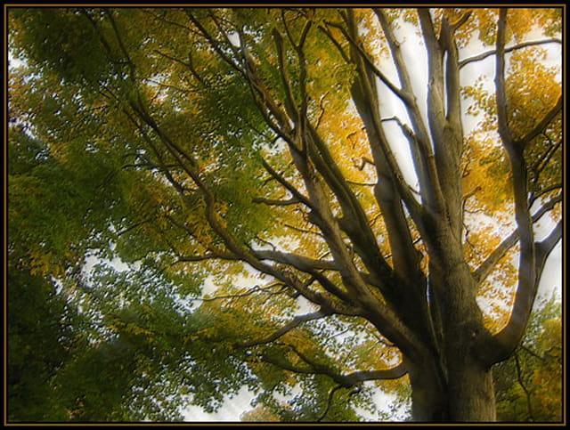 L'arbre aux couleurs d'automne