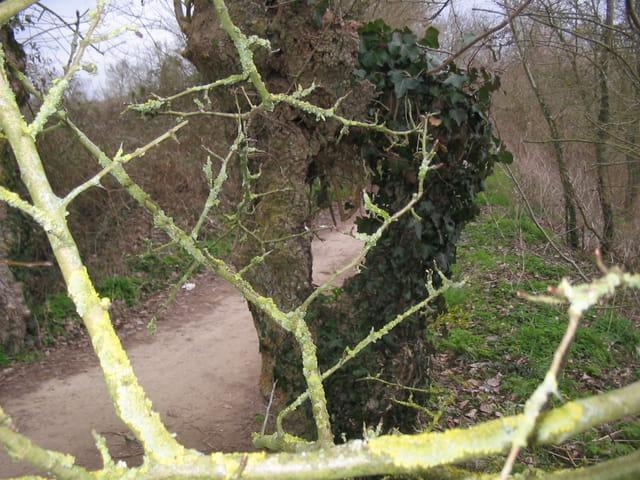 L'arbre creux.