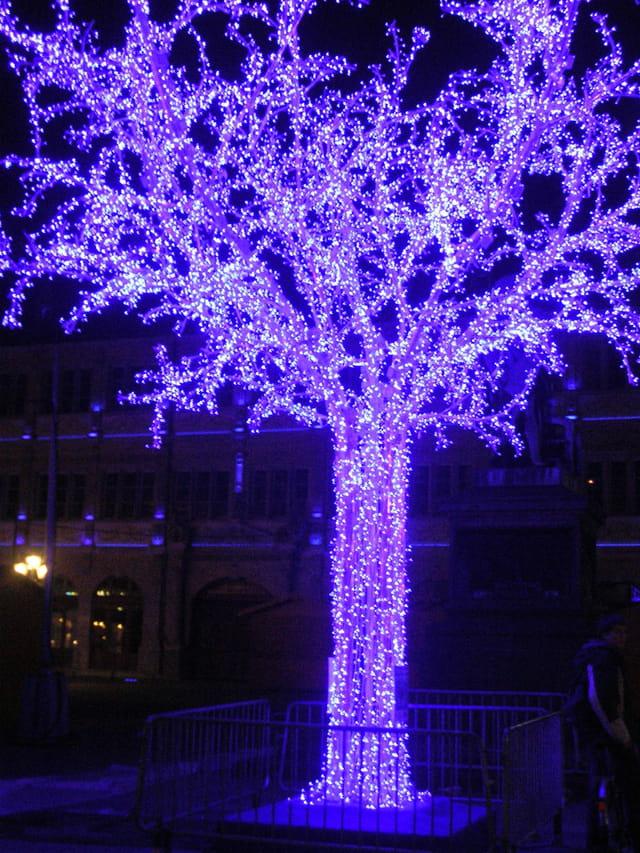 L'arbre de paix