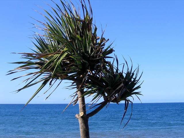 L'arbre et la mer