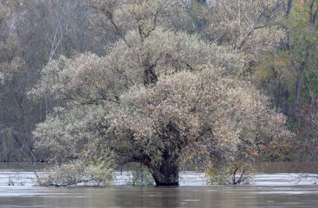 L'arbre et le fleuve