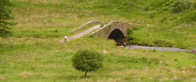 L'arbre et le pont