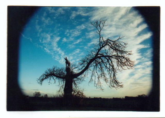 L'arbre-garou