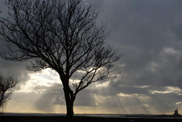 L'arbre noir