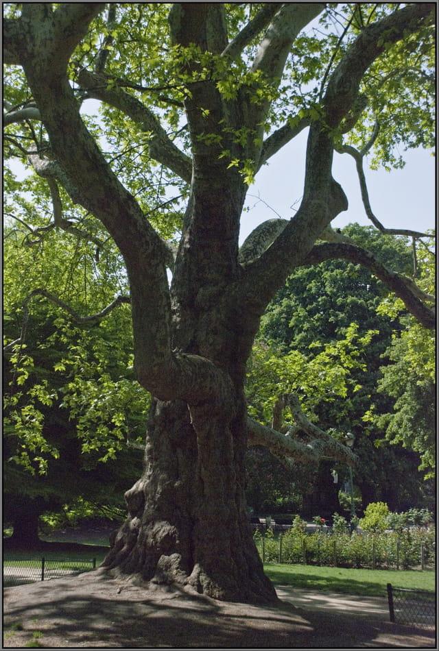 l 39 arbre remarquable par jean pierre tolomio sur l 39 internaute. Black Bedroom Furniture Sets. Home Design Ideas