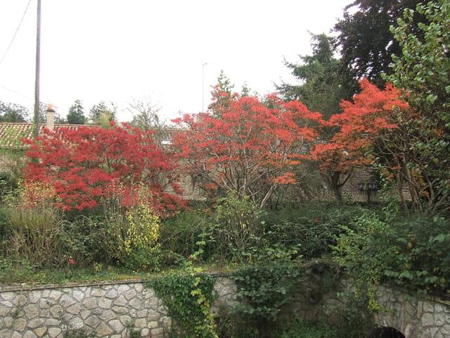 L arbuste rouge