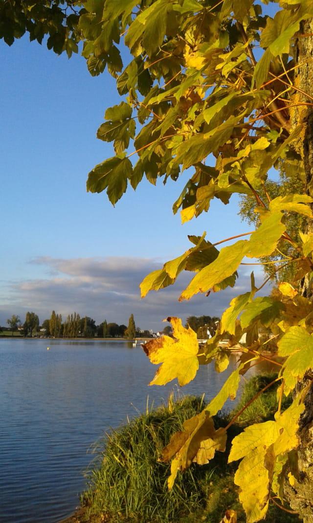 l'automne au bord de l'étang