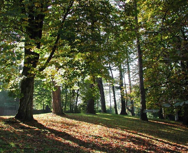 L'automne au parc