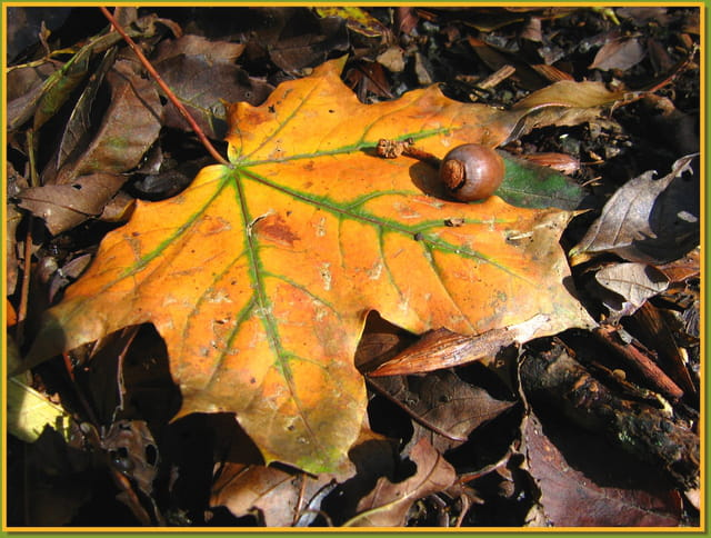 L'automne en feuille mordorée