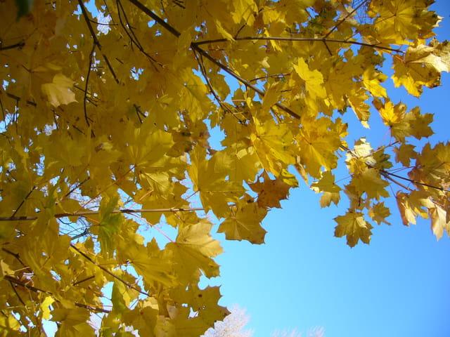 L'automne en jaune et bleu