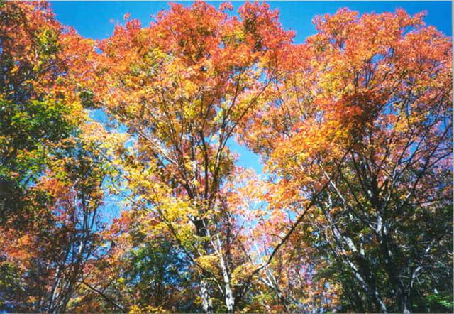 l'automne et ses couleurs