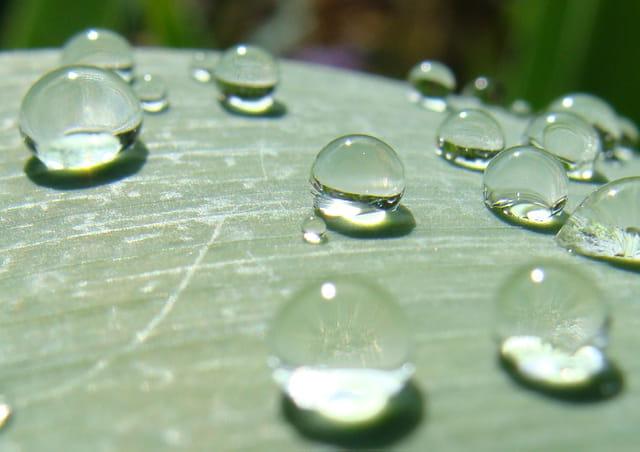 l'eau , élément de vie