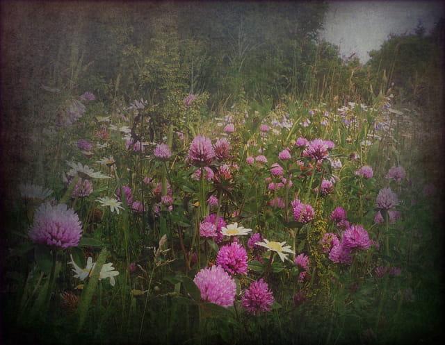 L'éclosion massive des fleurs sauvages